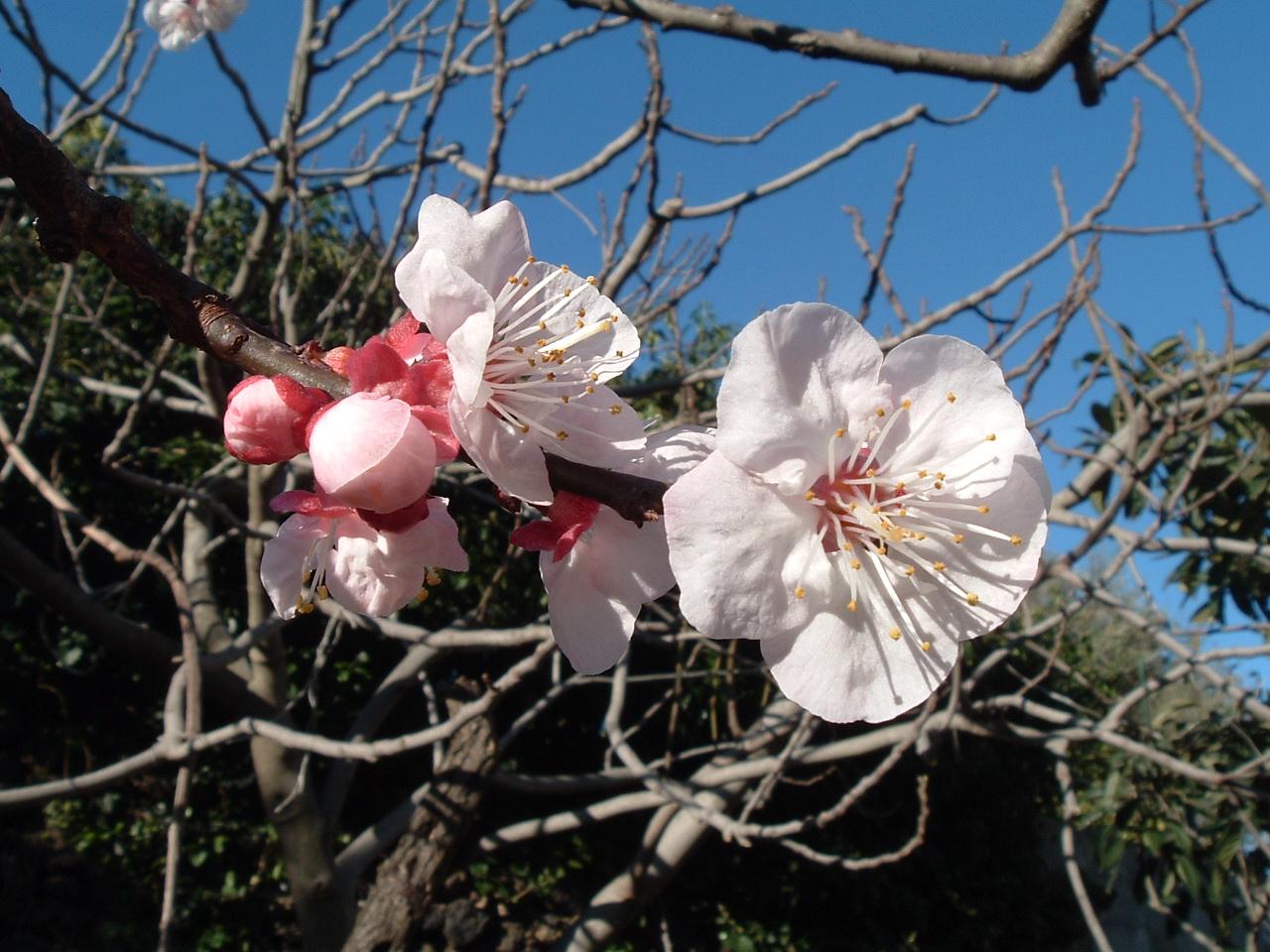 La fioritura: gli auguri di Pasqua della Presidente