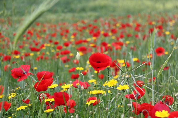 Storie di semi e di fiori
